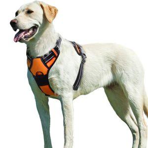 HARNAIS ANIMAL Gilet pour chien/Harnais Chien- Orange taille XL -