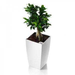 JARDINIÈRE - POT FLEUR  Pot carré BLANC avec réserve d'eau 35 cm ALGARVE