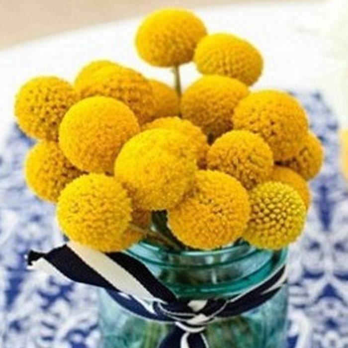 Graines Fleur Hortensia Or 20 Pcs FR30532
