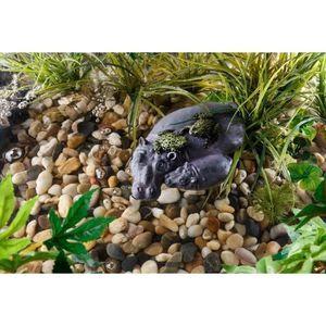 DÉCO VÉGÉTALE - RACINE Icaverne inedit plante d'aquarium - vivarium - ter