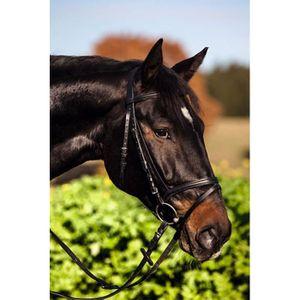 L/'eau Mors Cheval Tige Pony