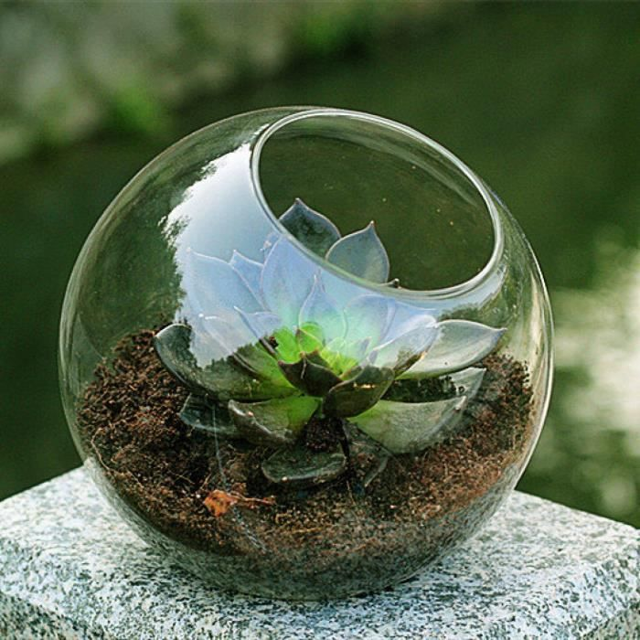verre mousse orb terrarium air plantes jardin int rieur terrarium vase succulentes planteur. Black Bedroom Furniture Sets. Home Design Ideas