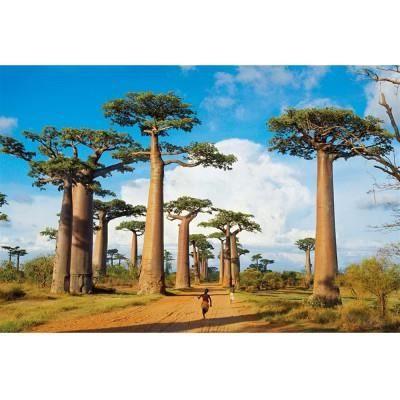 PUZZLE Puzzle 1000 pièces : Baobabs à Madagascar