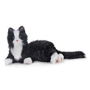 PELUCHE Peluche O7A7G nouvelle joie pour tous les chats ro
