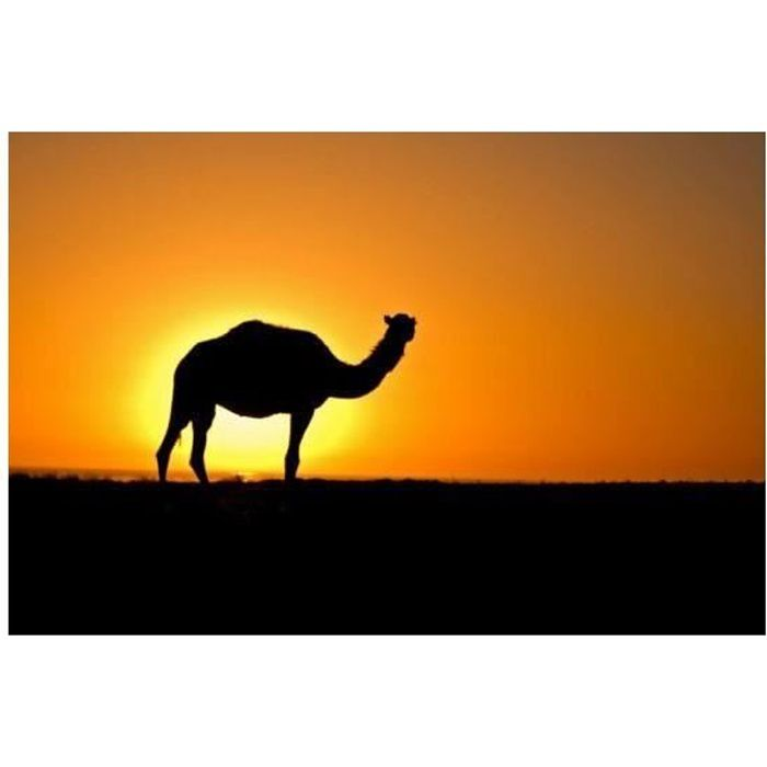 LIQUIDE E-liquide Camel ELIQUID FRANCE