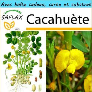 BEURRE DE CACAHUÈTE SAFLAX - Kit cadeau - Cacahuète - 8 graines - Arac