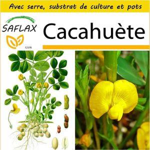 BEURRE DE CACAHUÈTE SAFLAX - Kit de culture  - Cacahuète - 8 graines -