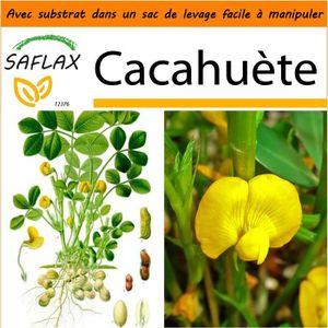 BEURRE DE CACAHUÈTE SAFLAX - Jardin dans le sac - Cacahuète - 8 graine