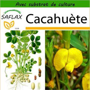 BEURRE DE CACAHUÈTE SAFLAX - Cacahuète - 8 graines - Avec substrat - A