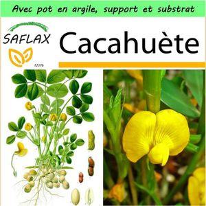 BEURRE DE CACAHUÈTE SAFLAX - Jardin dans la boîte - Cacahuète - 8 grai