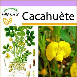 BEURRE DE CACAHUÈTE SAFLAX - Cacahuète - 8 graines  - Arachis hypogaea