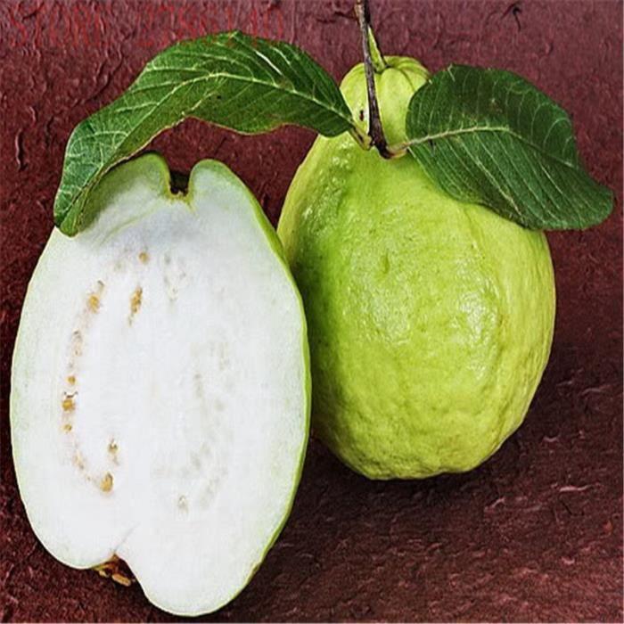 30 pcs / sac de graines de goyave, graines de fruits biologiques