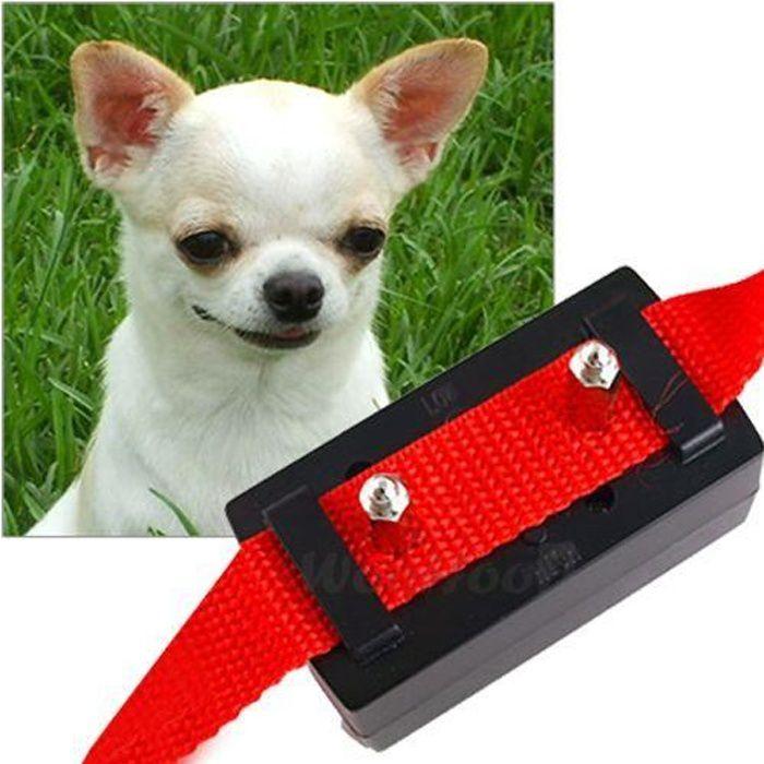 collier pour chien aboie