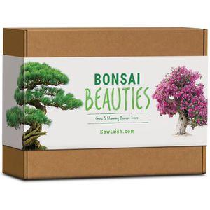 ARBRE - BUISSON Bonsaï Beauties Kit de graines Tout ce dont vous a