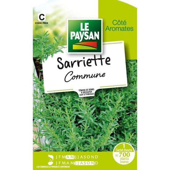 Aneth Coriandre Lot de 4 graines d/'herbe-Fenouil menthe poivrée