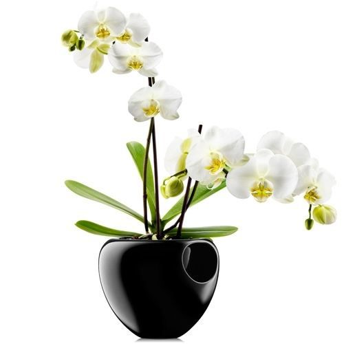 pot orchid e eva solo achat vente jardini re pot fleur pot orchid e eva solo cdiscount. Black Bedroom Furniture Sets. Home Design Ideas