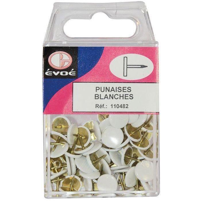Punaises blanches