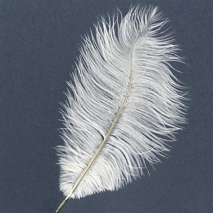 Plume d'autruche - Blanc - 35cm environ