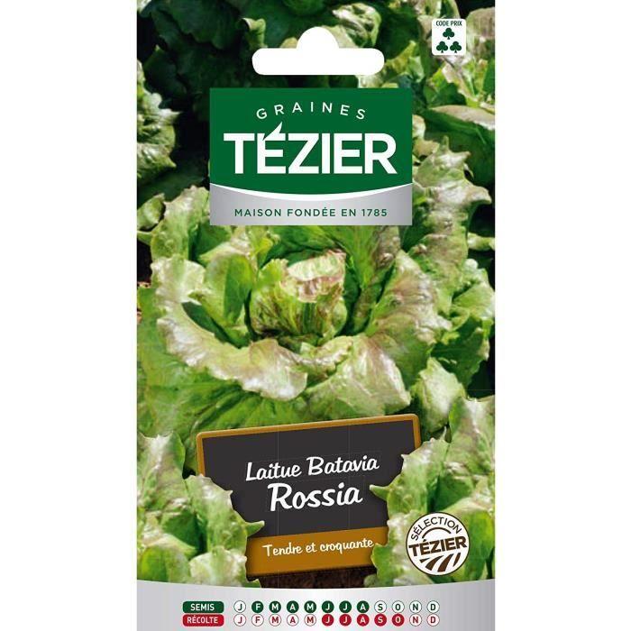 Sachet Graines - Tezier - Laitue Batavia Rossia sélection Tézier (G.B.) - Sachet légume petit modèle - (Mois de semis de 2 à 8)