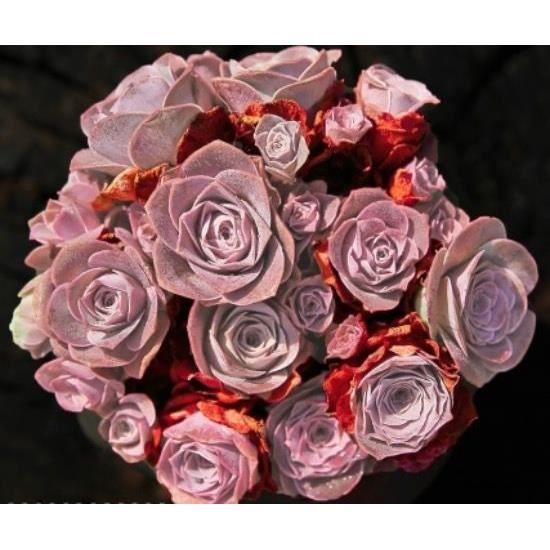 10 Graines De Greenovia Aizoon, Montagne Rose, Mignon Plantes Grasses, Exotiques Rares Succulentes À Fleurs Graines, Idée Cadeau D