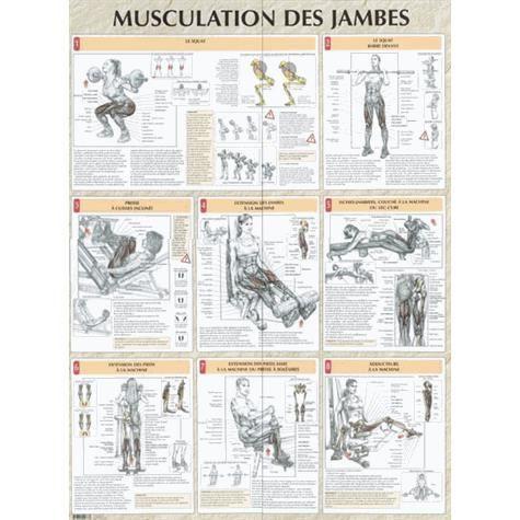Musculation des jambes