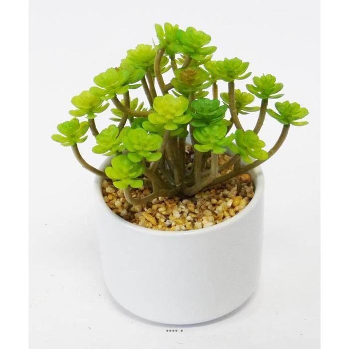 Sedum Cactus Agave Succulente plante artificielle cactee en pot ceramique H 20 cm Vert Type A