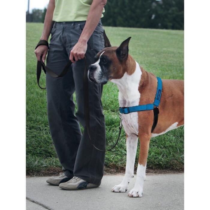 EASY WALK Harnais Deluxe M-L - Bleu Océan - Pour chien