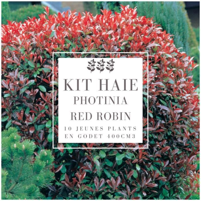Kit Haie Photinia (Photinia Fraseri 'Red Robin') - Haie en Kit - 10 Jeunes Plants