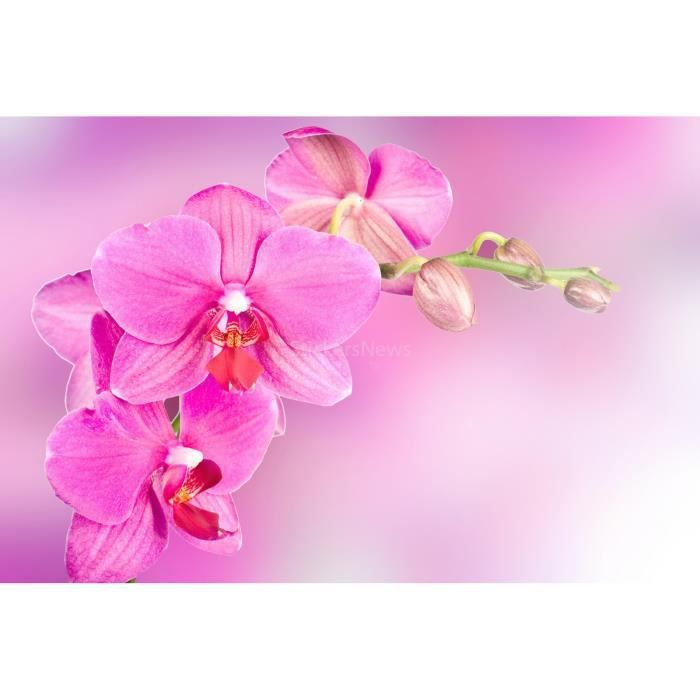 orchidee rose