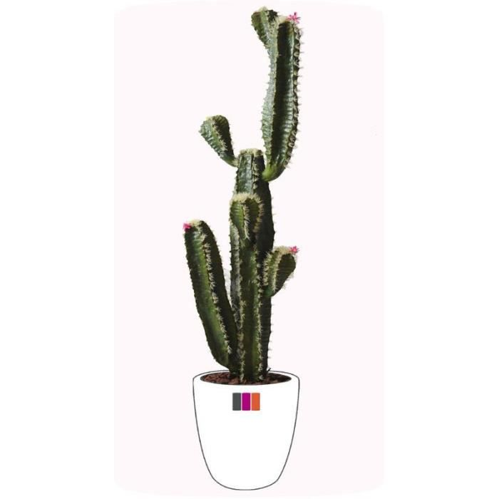 cactus tronc artificiel 170cm achat vente fleur artificielle cdiscount. Black Bedroom Furniture Sets. Home Design Ideas