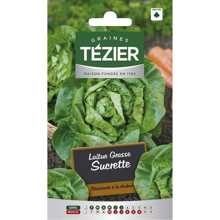 Sachet Graines - Tezier - Laitue Grasse Sucrette (remplace Sucrine) - Sachet légume petit modèle - (Mois de semis de 2 à 7)