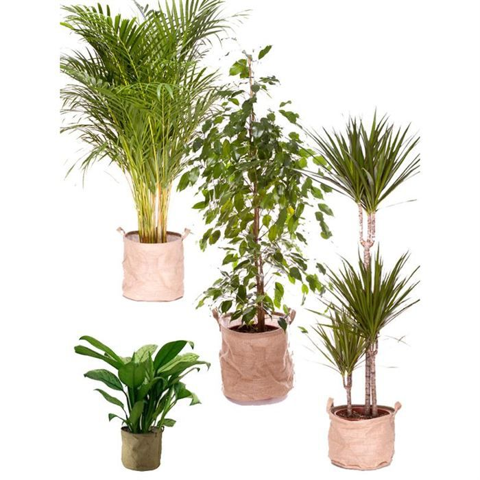 pack plantes d polluantes l achat vente plante pouss e pack plantes d polluantes l cdiscount. Black Bedroom Furniture Sets. Home Design Ideas