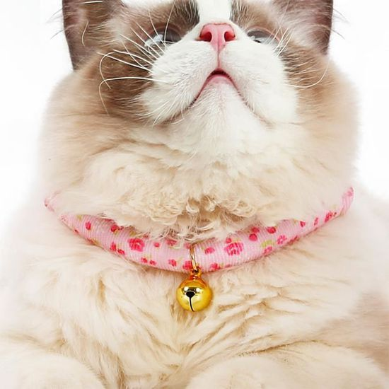 beau collier chat