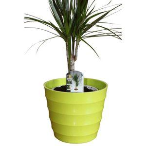JARDINIÈRE - POT FLEUR  Ce grand cache-pot convient parfaitement aux plant