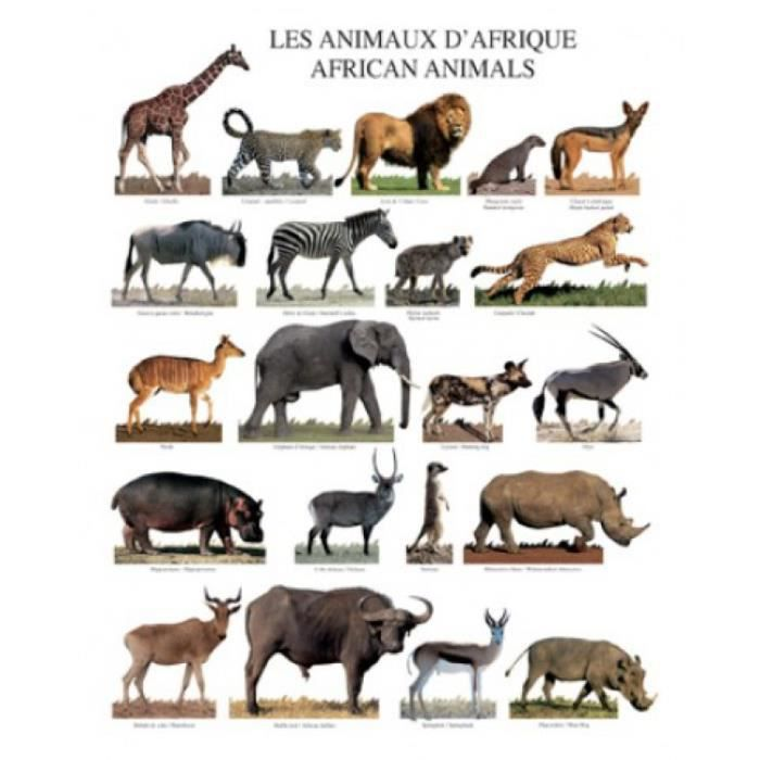 animaux poster reproduction animaux d afrique 50 x 40. Black Bedroom Furniture Sets. Home Design Ideas