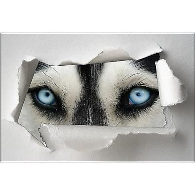 Sticker trompe l oeil papier d chir d co yeux de loup r f for Decoration murale loup