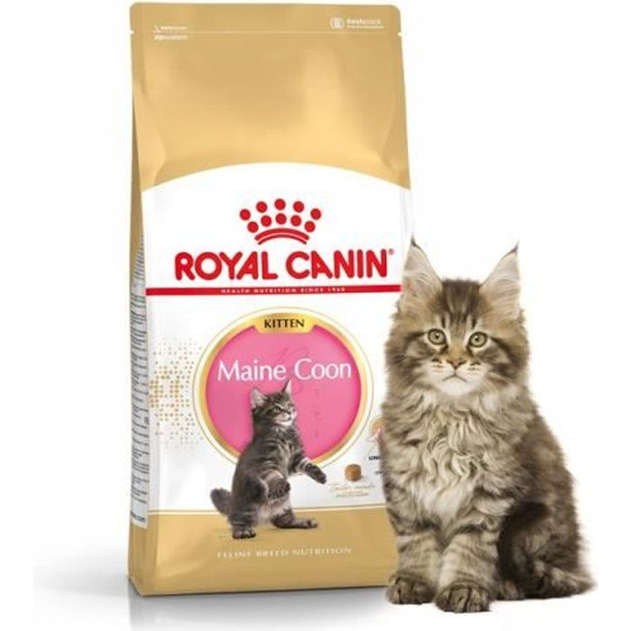 croquettes pour chats royal canin kitten maine achat vente croquettes croquettes pour. Black Bedroom Furniture Sets. Home Design Ideas