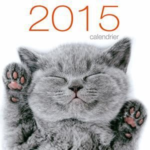 Calendrier mural chats 2015 achat vente livre for Calendrier mural 2015