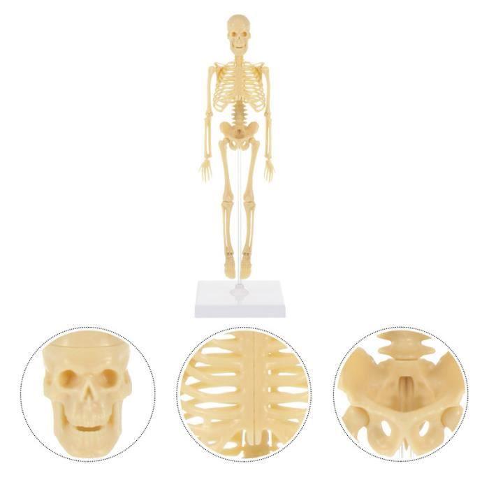 Modèle de squelette humain Simulation Mannequin bricolage assemblage mannequin modèle enfants jouet TELEVISEUR LED