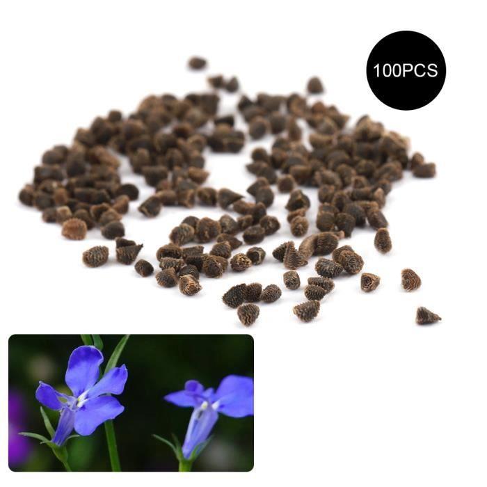 Graine semence 100 PCS Cléopâtre Lobelia Erinus Thunb Graines Jardinage Décoration Inddor -CER