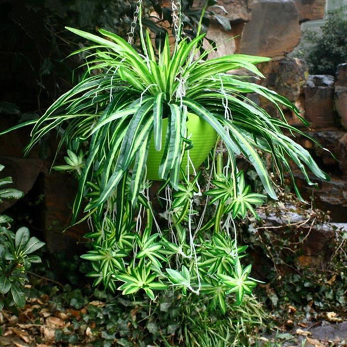 Plante Exterieur Toute Saison Pas Cher plante verte interieur