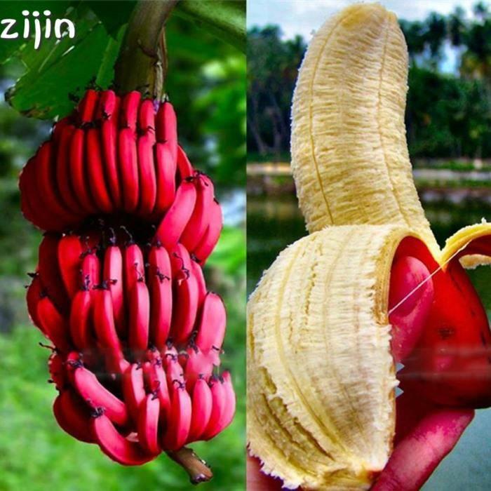 2019 50 Pcs Banane Rouge Bonsaï Rare Hainan Bananier Délicieux Fruit En Pot Plante Pour La Maison Et Le Jardin #96